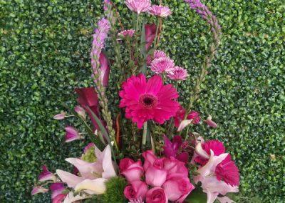 sandiegoflowers-63